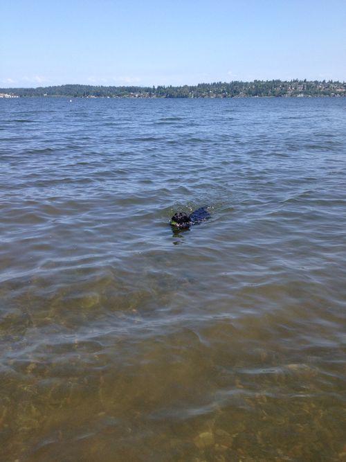 Parker swim 1